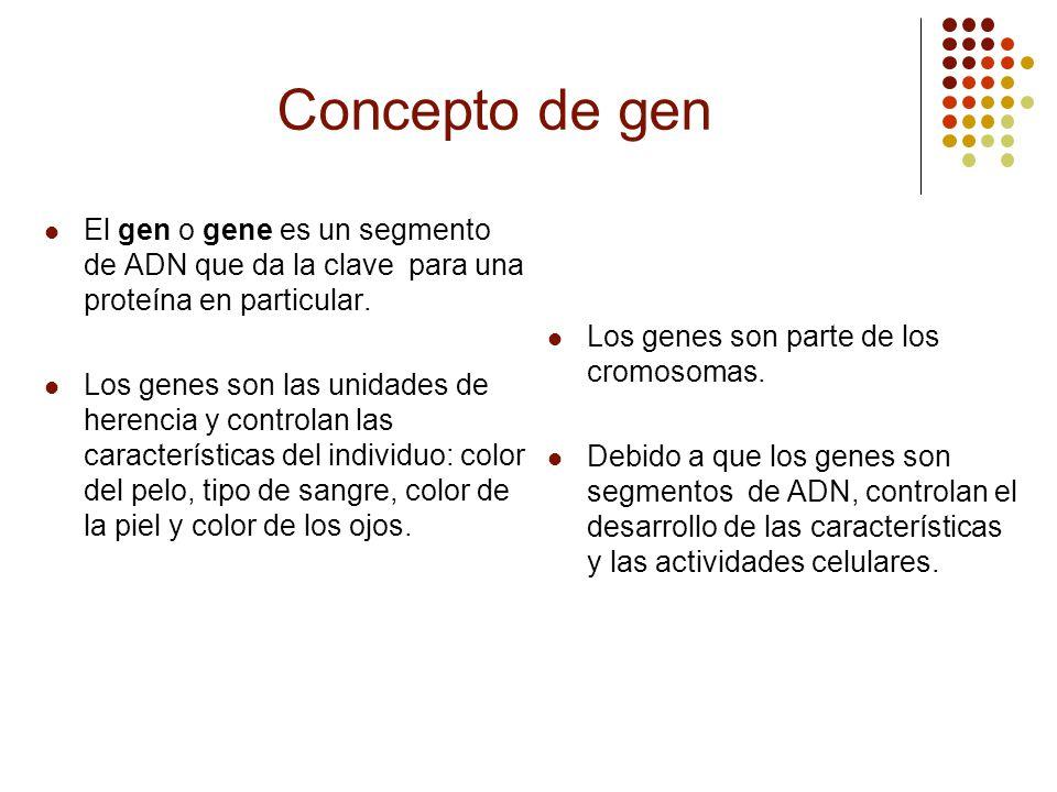 Concepto de gen El gen o gene es un segmento de ADN que da la clave para una proteína en particular.