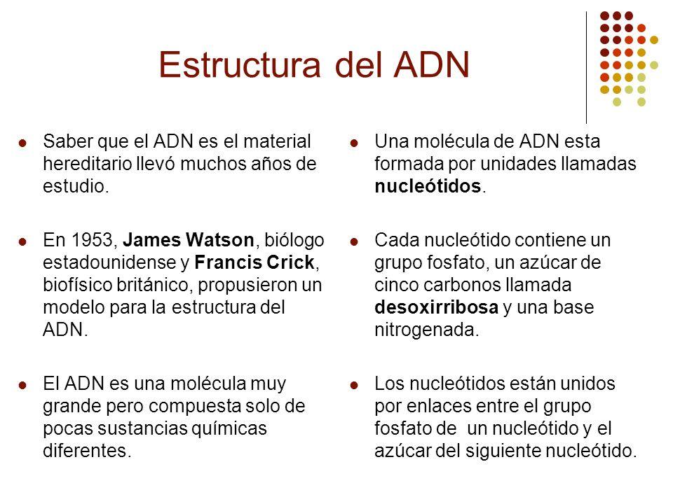 Estructura del ADN Saber que el ADN es el material hereditario llevó muchos años de estudio.