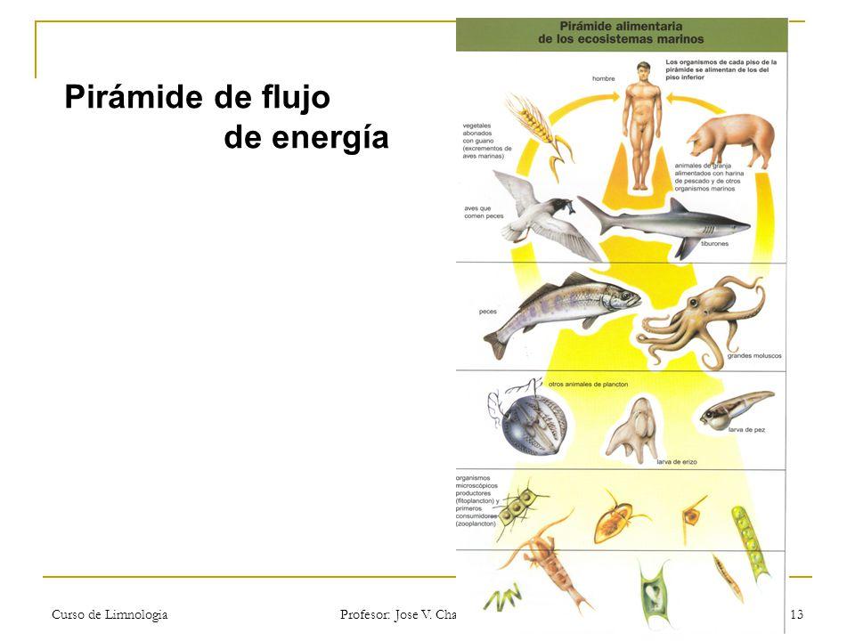 Pirámide de flujo de energía