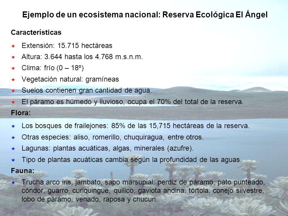 Ejemplo de un ecosistema nacional: Reserva Ecológica El Ángel