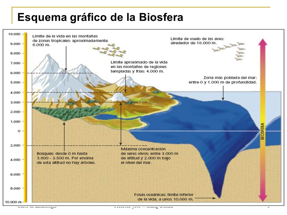 Esquema gráfico de la Biosfera