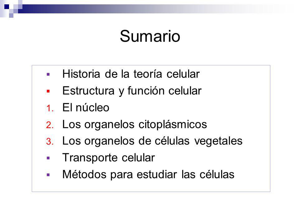 Sumario Historia de la teoría celular Estructura y función celular