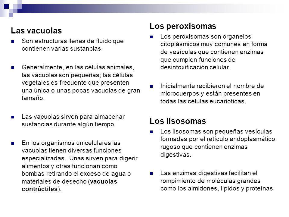 Los peroxisomas Las vacuolas Los lisosomas