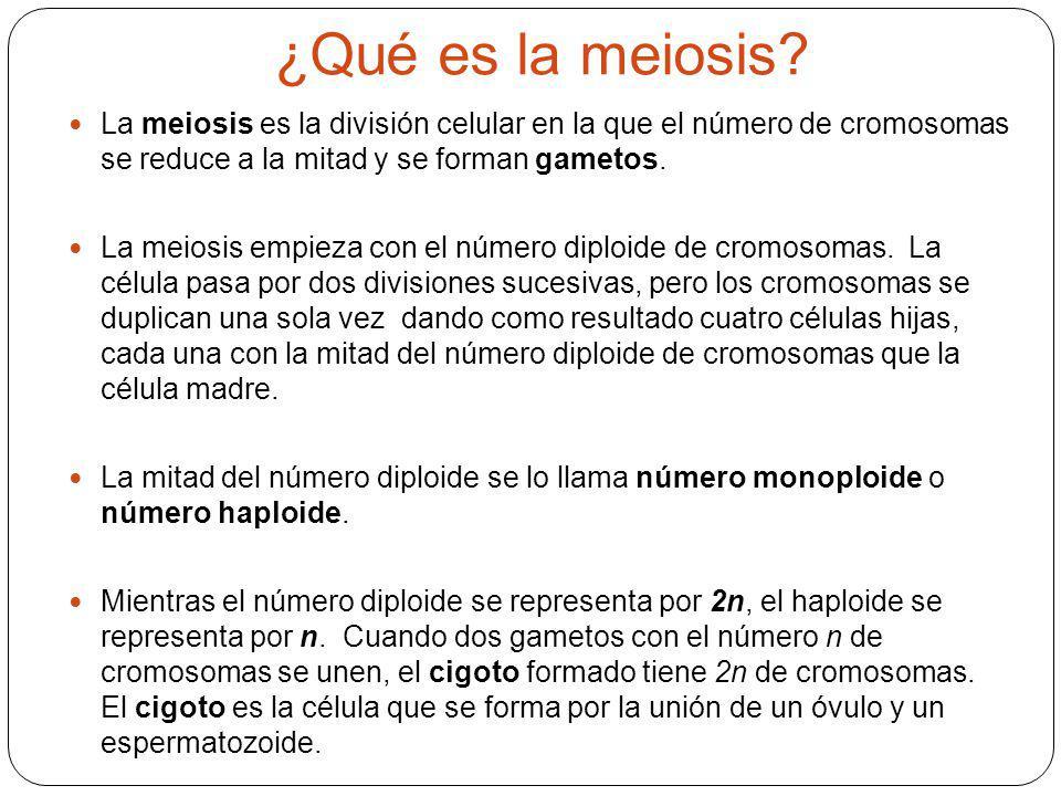 ¿Qué es la meiosis La meiosis es la división celular en la que el número de cromosomas se reduce a la mitad y se forman gametos.