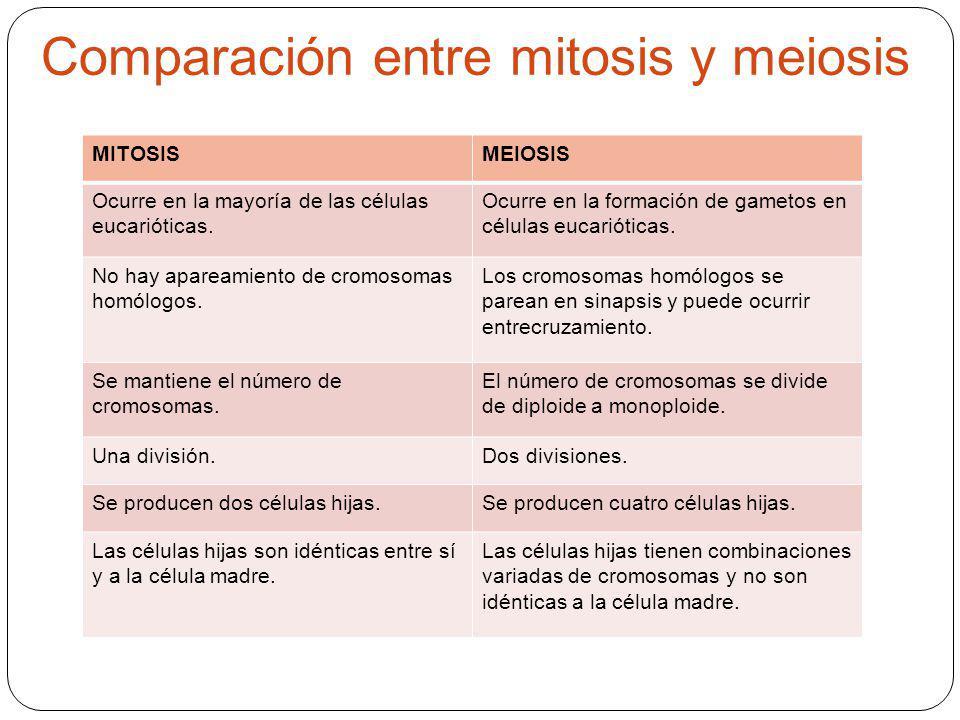 Comparación entre mitosis y meiosis