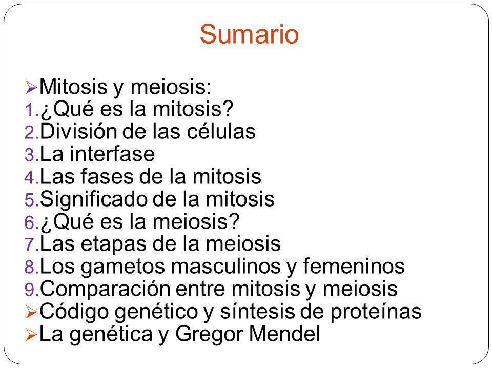 Sumario Mitosis y meiosis: ¿Qué es la mitosis División de las células