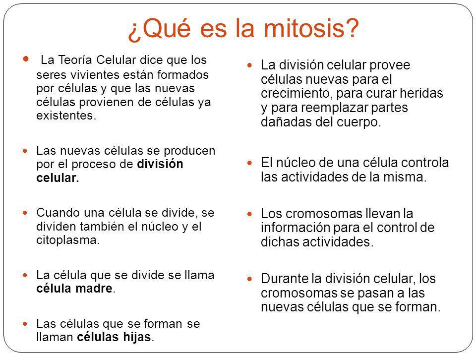 ¿Qué es la mitosis