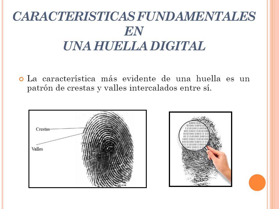 CARACTERISTICAS FUNDAMENTALES EN UNA HUELLA DIGITAL