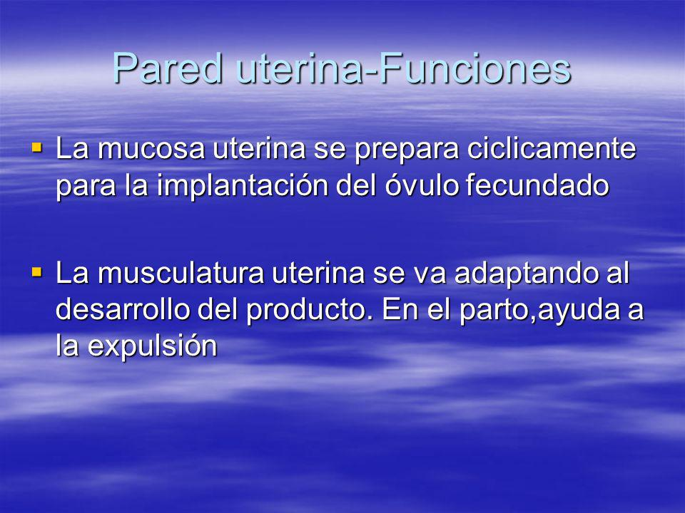 Pared uterina-Funciones