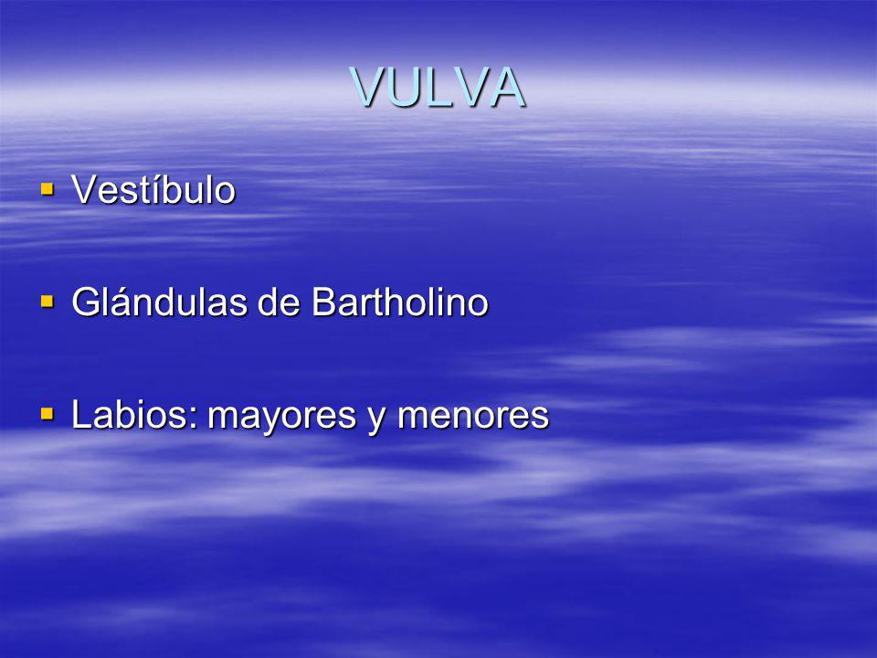 VULVA Vestíbulo Glándulas de Bartholino Labios: mayores y menores