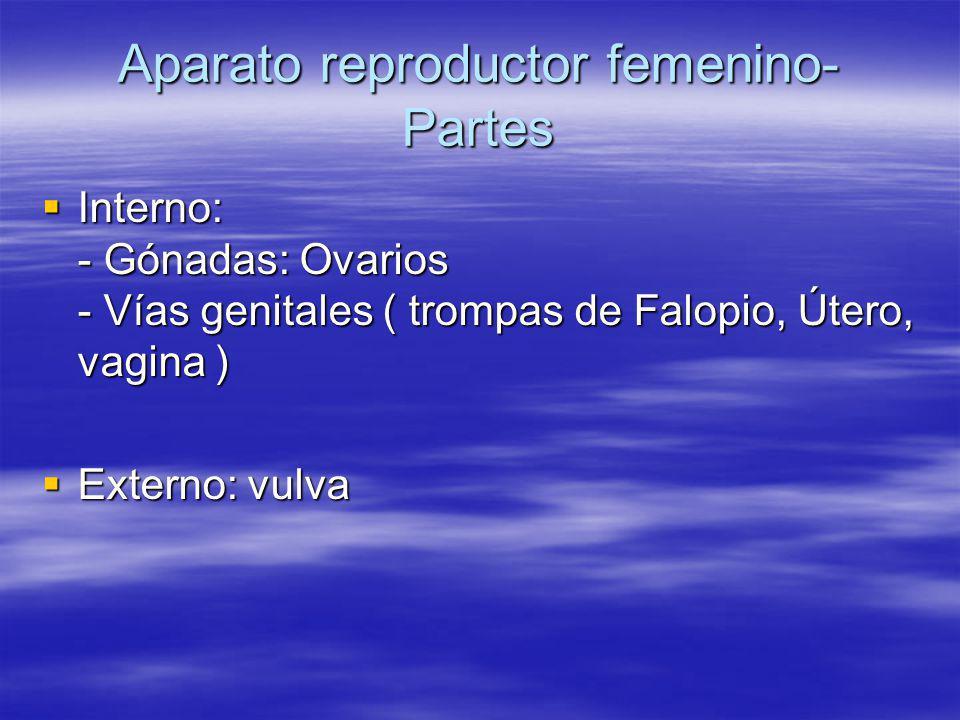 Aparato reproductor femenino-Partes