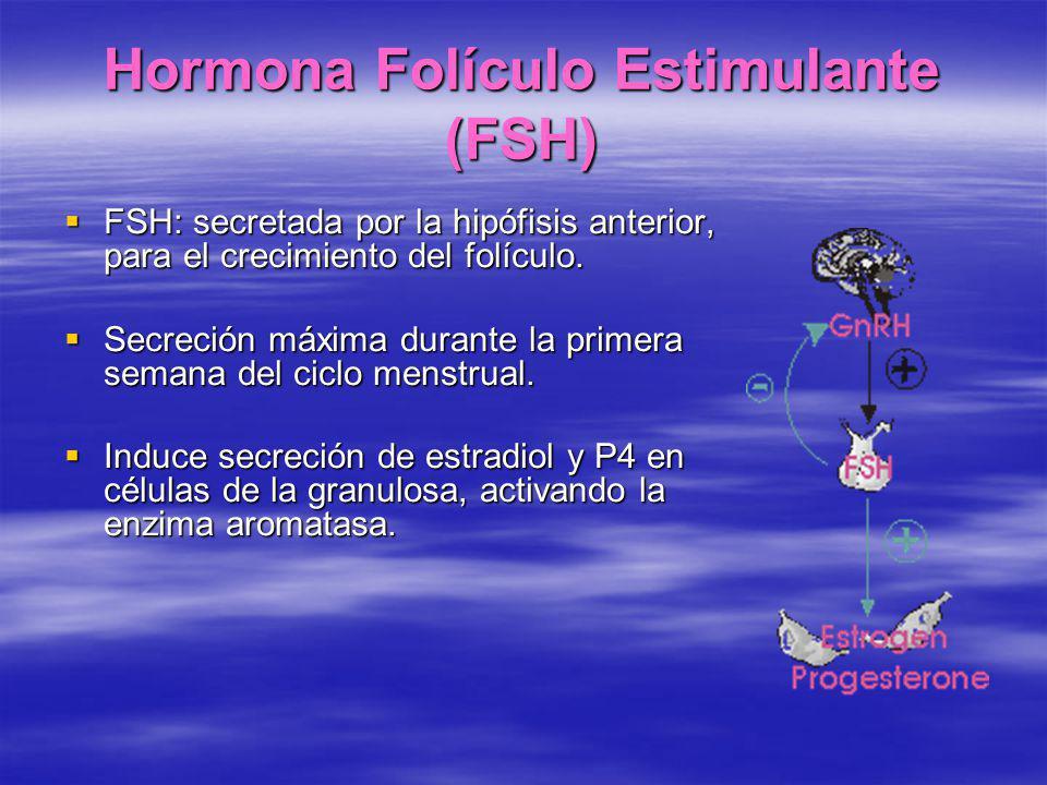Hormona Folículo Estimulante (FSH)