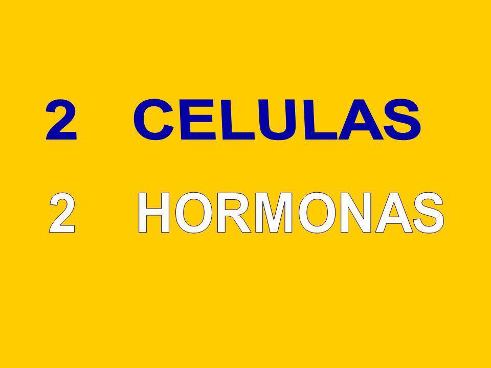 2 CELULAS 2 HORMONAS