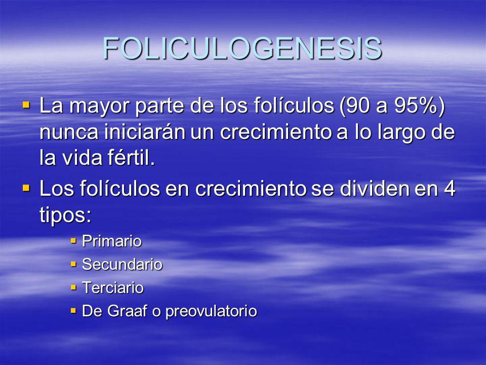 FOLICULOGENESIS La mayor parte de los folículos (90 a 95%) nunca iniciarán un crecimiento a lo largo de la vida fértil.