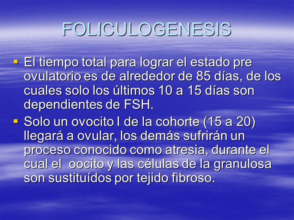 FOLICULOGENESIS