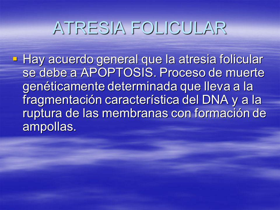 ATRESIA FOLICULAR