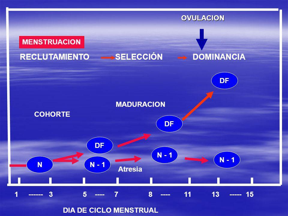 RECLUTAMIENTO SELECCIÓN DOMINANCIA