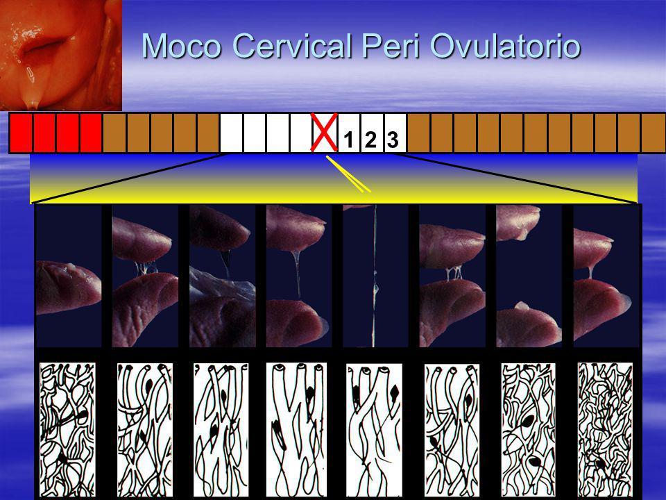 Moco Cervical Peri Ovulatorio