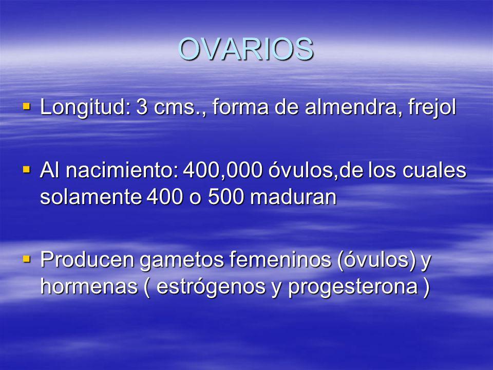 OVARIOS Longitud: 3 cms., forma de almendra, frejol