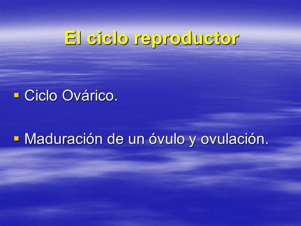 El ciclo reproductor Ciclo Ovárico.