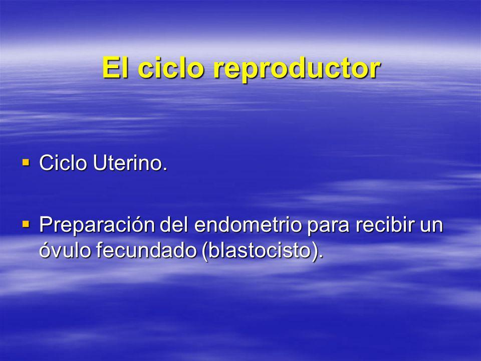 El ciclo reproductor Ciclo Uterino.