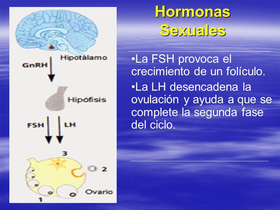 Hormonas Sexuales La FSH provoca el crecimiento de un folículo.