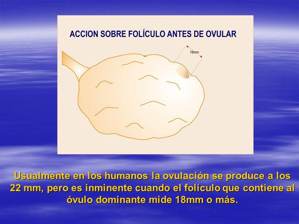 Usualmente en los humanos la ovulación se produce a los 22 mm, pero es inminente cuando el folículo que contiene al óvulo dominante mide 18mm o más.