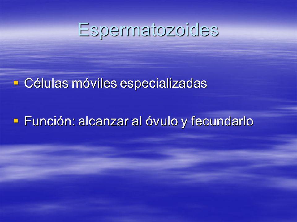 Espermatozoides Células móviles especializadas