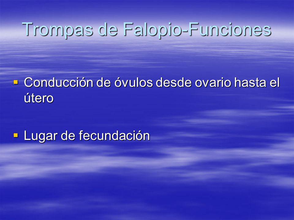 Trompas de Falopio-Funciones