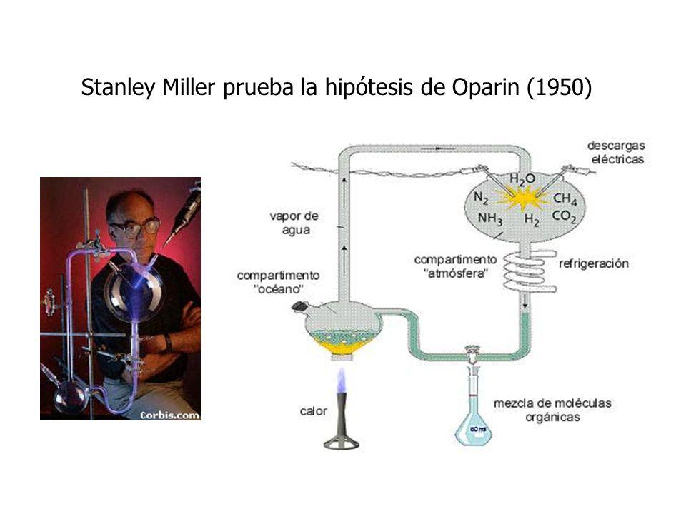Stanley Miller prueba la hipótesis de Oparin (1950)