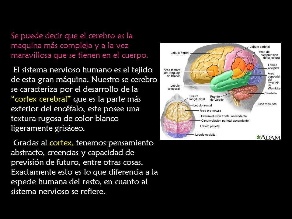 Se puede decir que el cerebro es la maquina más compleja y a la vez maravillosa que se tienen en el cuerpo.