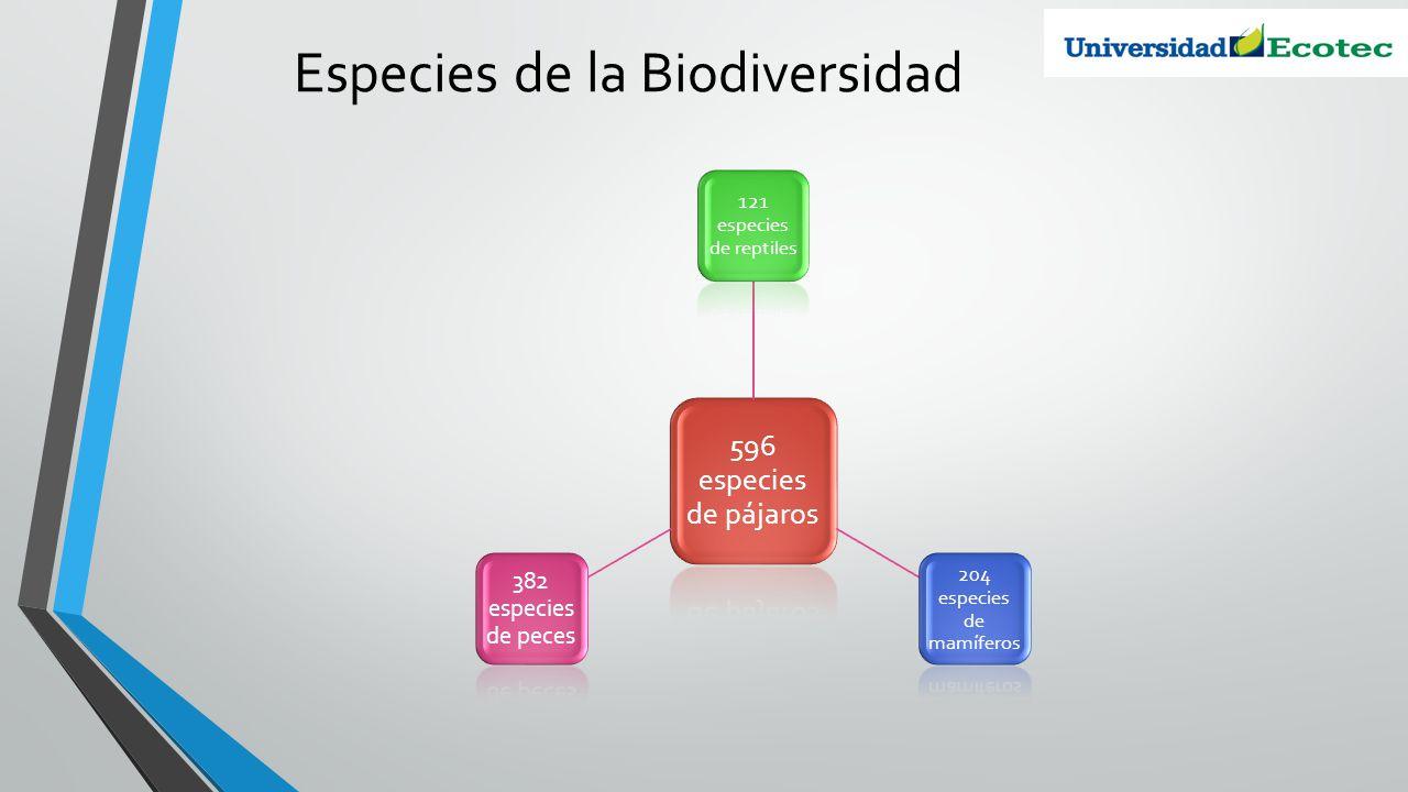 Especies de la Biodiversidad