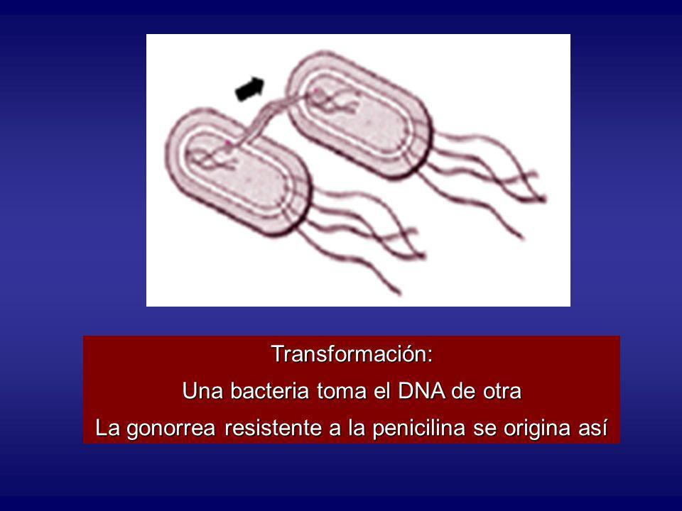 Una bacteria toma el DNA de otra