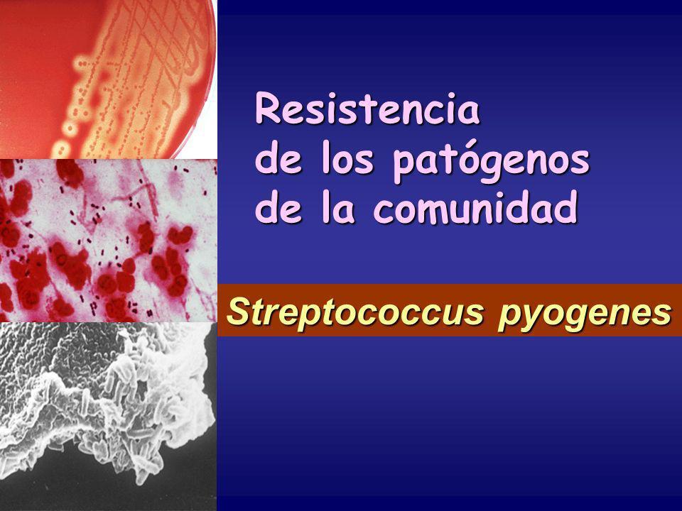 Resistencia de los patógenos de la comunidad Streptococcus pyogenes