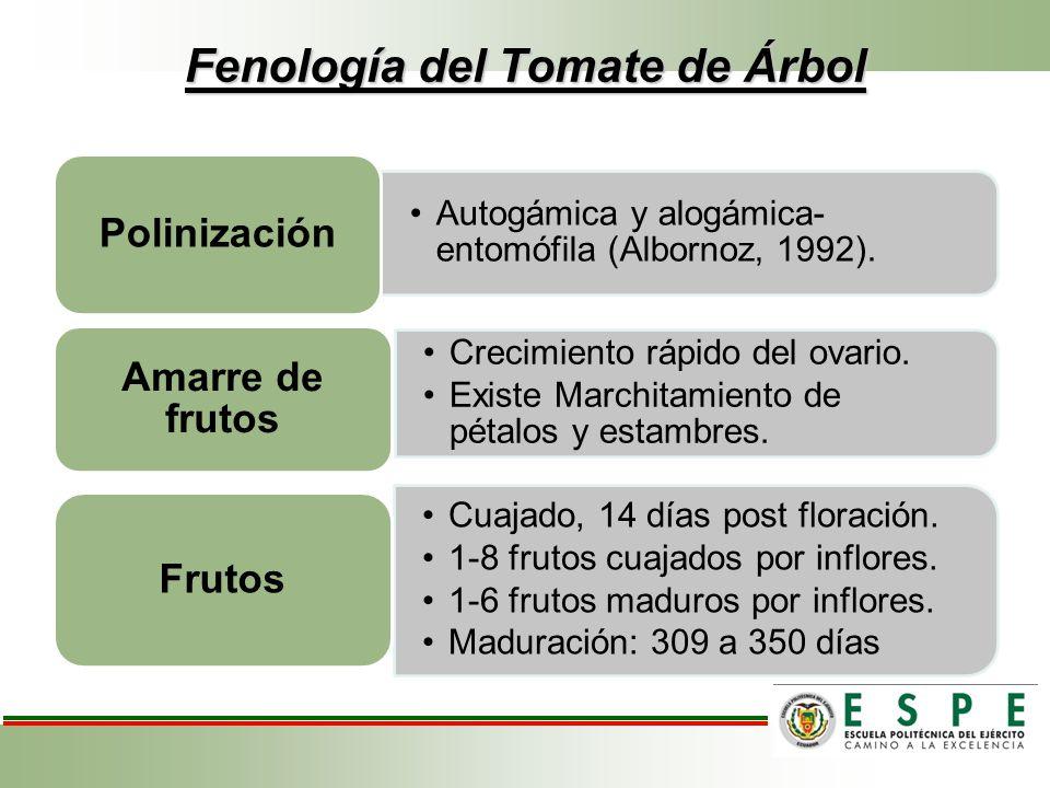 Fenología del Tomate de Árbol