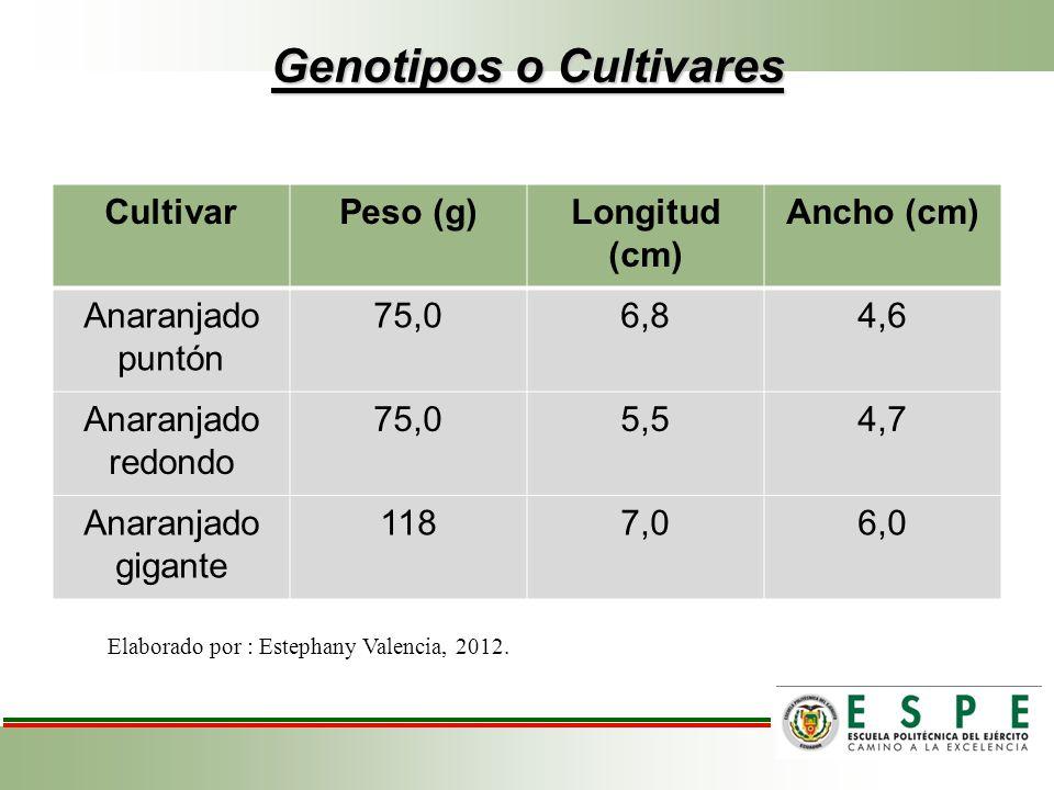 Genotipos o Cultivares
