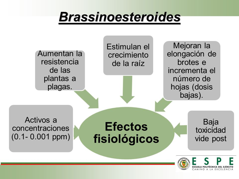 Brassinoesteroides Efectos fisiológicos