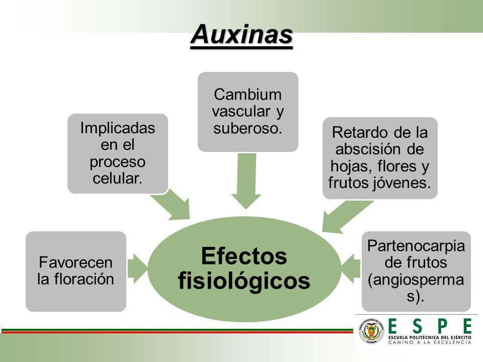 Auxinas Efectos fisiológicos Favorecen la floración