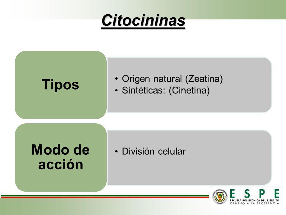 Citocininas Modo de acción Tipos Origen natural (Zeatina)