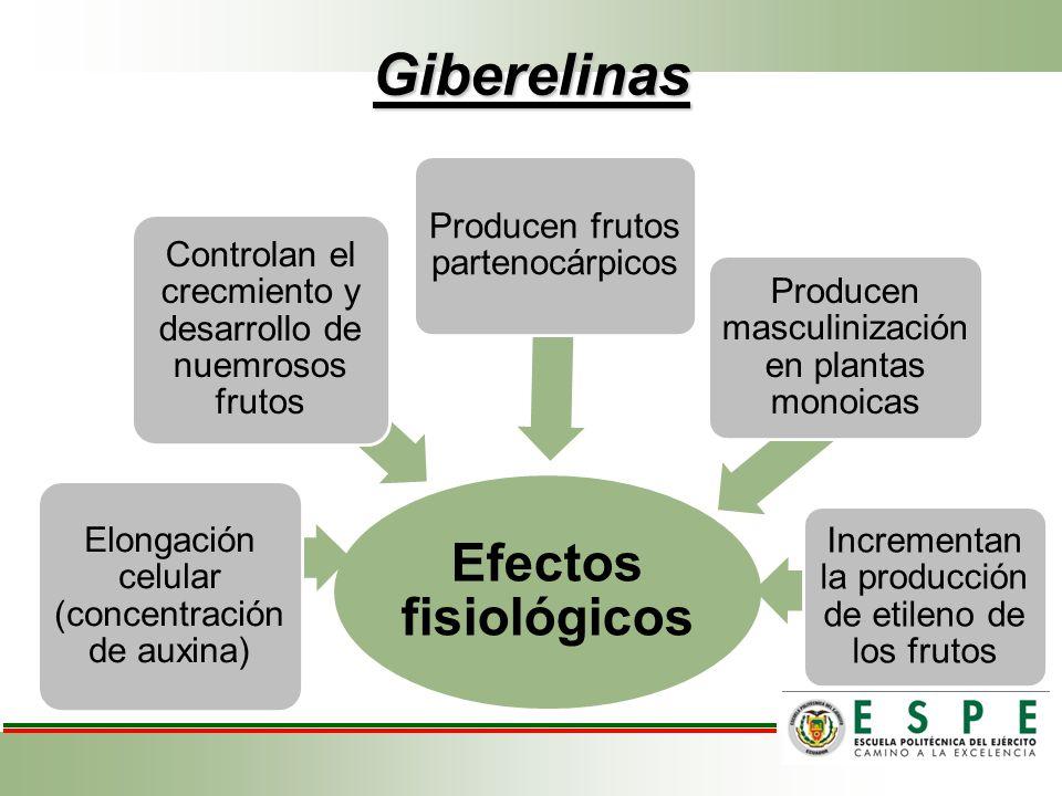 Giberelinas Efectos fisiológicos