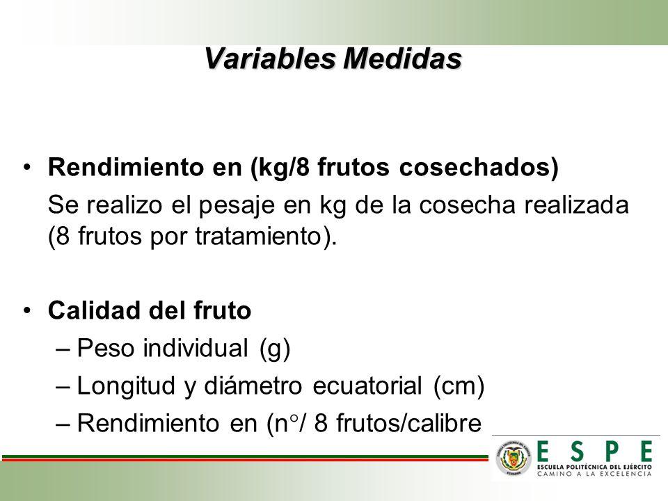 Variables Medidas Rendimiento en (kg/8 frutos cosechados)