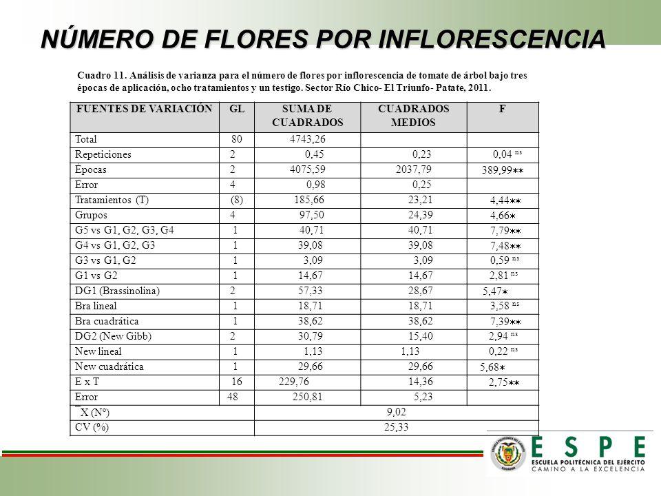 NÚMERO DE FLORES POR INFLORESCENCIA