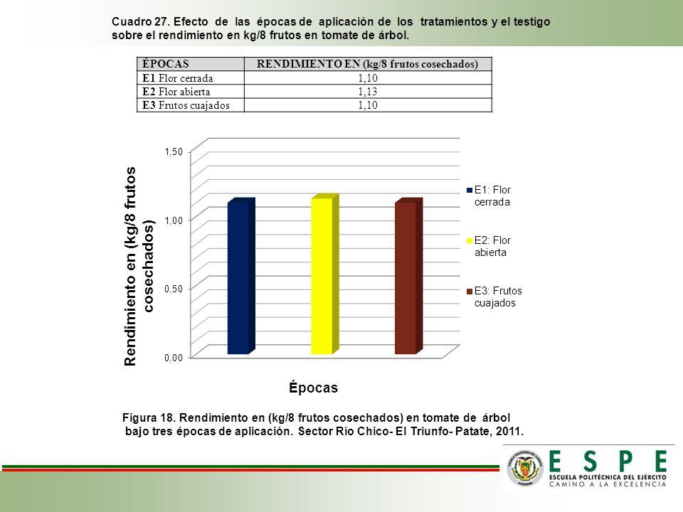 RENDIMIENTO EN (kg/8 frutos cosechados)