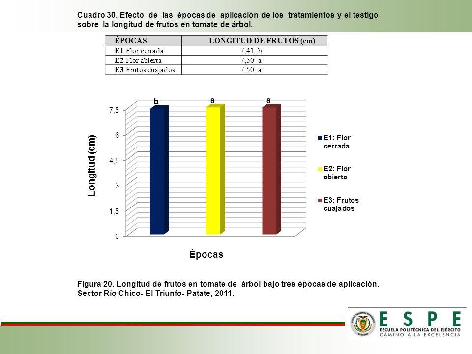 Cuadro 30. Efecto de las épocas de aplicación de los tratamientos y el testigo sobre la longitud de frutos en tomate de árbol.