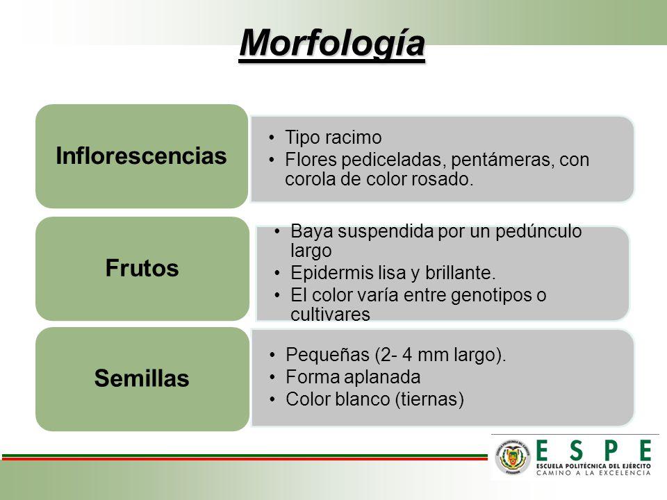 Morfología Inflorescencias Frutos Semillas Tipo racimo