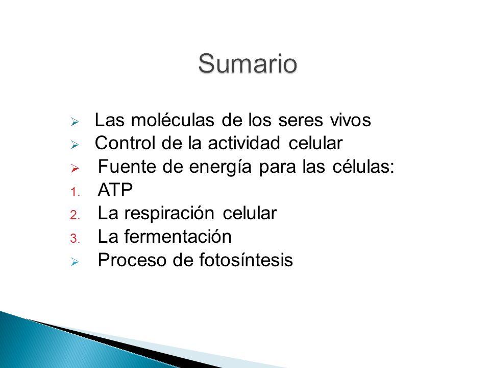 Sumario Las moléculas de los seres vivos
