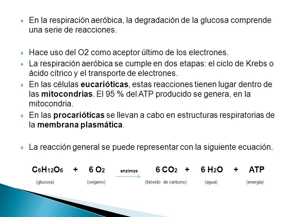 En la respiración aeróbica, la degradación de la glucosa comprende una serie de reacciones.
