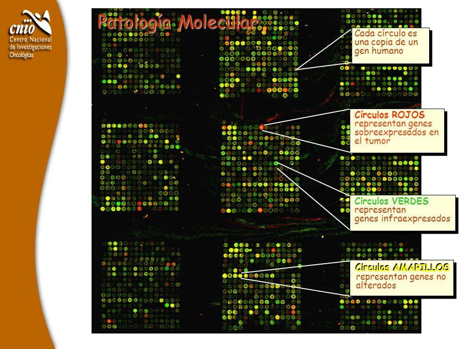 Patología Molecular Cada círculo es una copia de un gen humano
