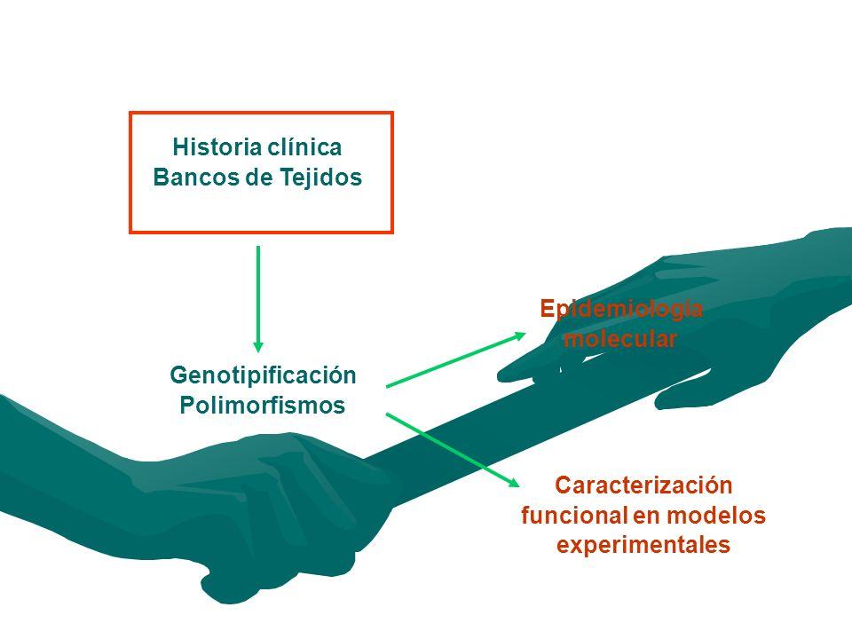 Caracterización funcional en modelos experimentales