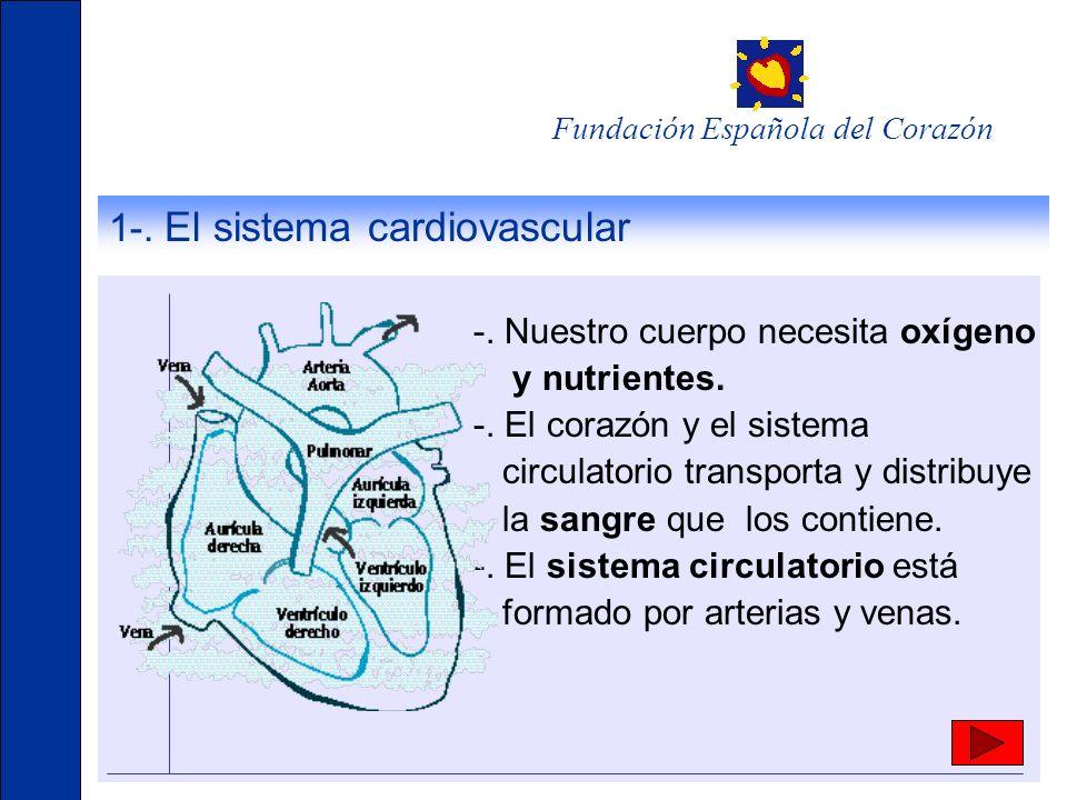 1-. El sistema cardiovascular